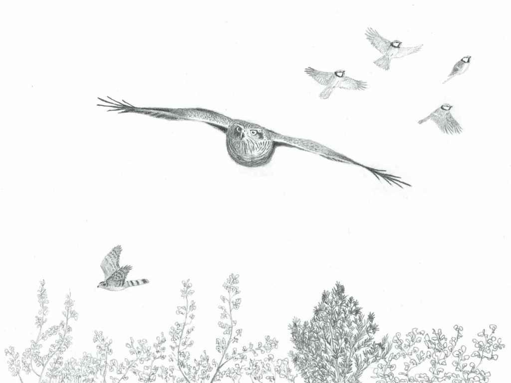 Lintujen Muutto Seuranta